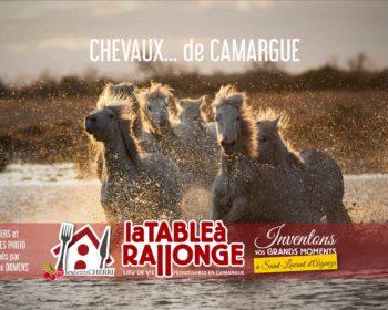 Stages et ateliers de photos en Camargue, hébergements spécialisés pour photographes en Camargue